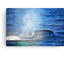 Humpback Whale taking a Breath Canvas Print