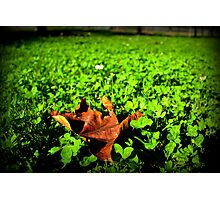 Leaf on clover Photographic Print