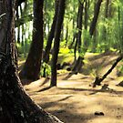 Kaloli Point  by Ellen Cotton
