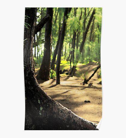 Kaloli Point  Poster