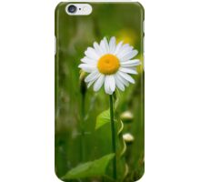 Daisy In the Meadow iPhone Case/Skin