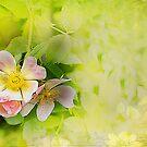Common wild rose by Irene  Burdell