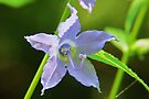 Tall Bellflower Closeup by Ron Russell