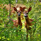 The Twins by Larry Trupp