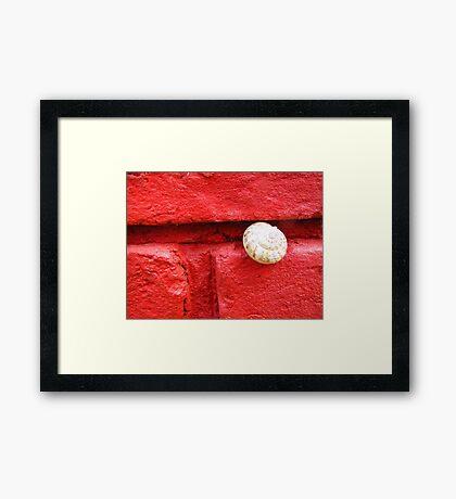 Snug Snail Sticking Out Framed Print
