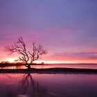 My Tree... Again. Victoria Point Qld Australia by Beth  Wode