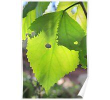 Sun shining through leaf - 4 Poster