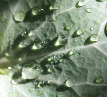 Rain on leaf with sun shining through drops by Terry Rodger Smith