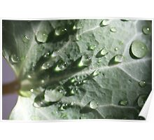 Rain on leaf with sun shining through drops Poster