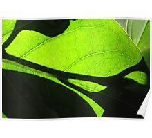 Sun shining through leaf - 5 Macro shot Poster