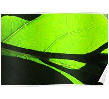 Sun shining through leaf - 6 Macro shot Poster