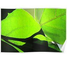 Sun shining through leaf - 7 Macro shot Poster