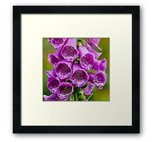 Close up of Foxglove Framed Print