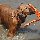 Athena Water Toy Toss by goldnzrule