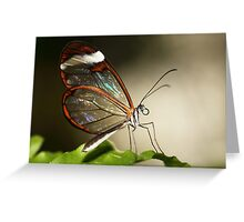 Glasswinged tropical butterfly Greeting Card