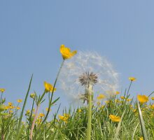Summer meadow by clivemassey
