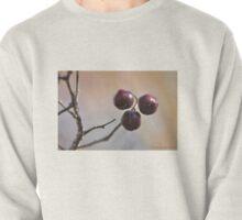 Choke Cherry - Prunus virginiana Pullover