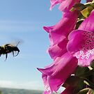 Flight Bee, Cleared To Land by Barrie Woodward