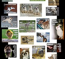 lolcats and the like by GolemAura