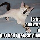lolz Stretch Kitty by GolemAura