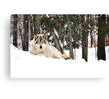 I am watching you - Timber Wolf Canvas Print