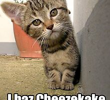 lolz Cheesecake Kitten by GolemAura