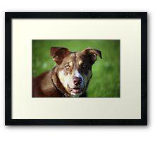 Portrait of Cody Framed Print
