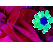 Pick the little daisys Photographic Print