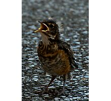 """Poor Little Robin"" Photographic Print"