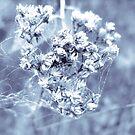 Dead flower by ciriva