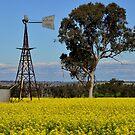 Canola Windmill - Merriwa NSW by Phil Woodman