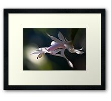 Dappled Delight Framed Print