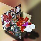 Orchid 4U by Ginny Schmidt