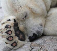Sleepy Polar by Chris Coates