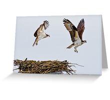 Synchronized Osprey Greeting Card
