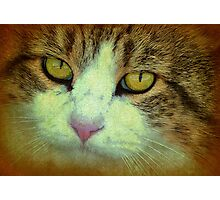 The Love Behind Those Eyes Photographic Print