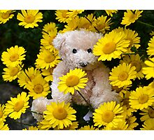 For Teddy Lovers Everywhere Photographic Print