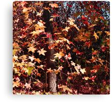 FALL GLORY IN GOLD, ORANGE, AND RED Canvas Print