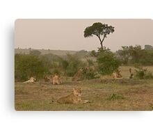 Seven Lions - Sieben Löwen Canvas Print
