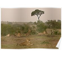 Seven Lions - Sieben Löwen Poster