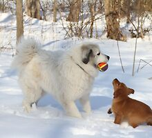 Uncle Goliath Please Share The Ball by goldnzrule