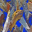 Wood Pile in Blue Contrast by noriesworld