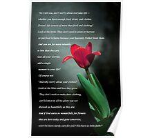 Matthew 6:25-30 Poster