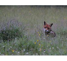Fox in the Rain Photographic Print