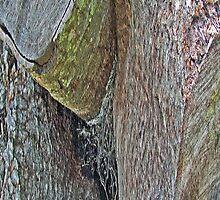 Wood Pile Wood III by noriesworld