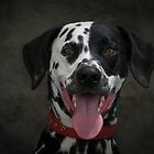 Happy Dotty by Mark Cooper