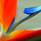 Bird of Paradise by Leon Heyns