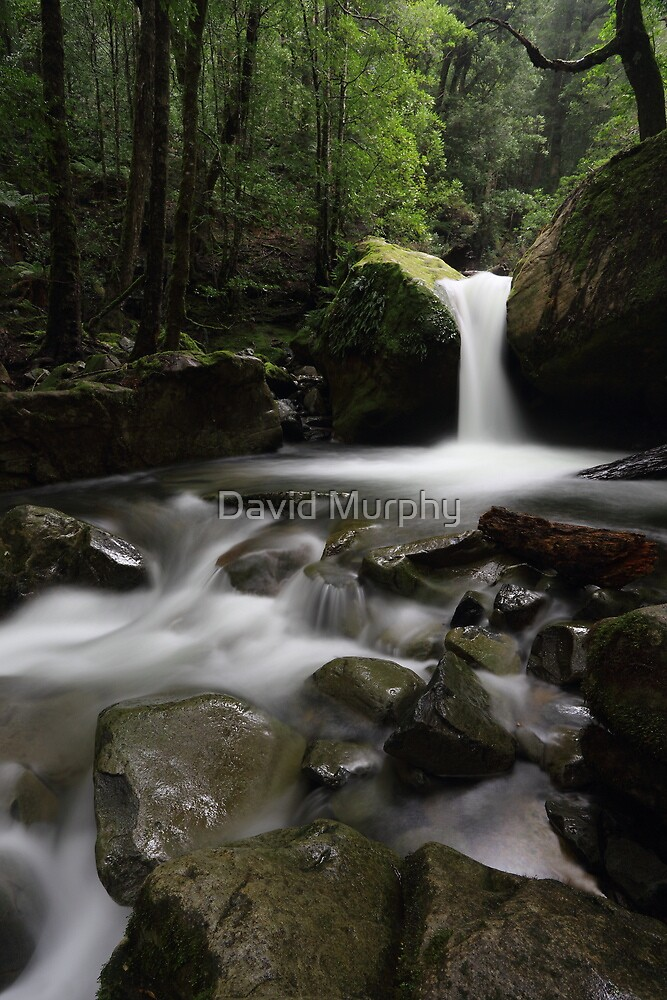 in the Chasm... by David Murphy