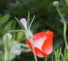 Flower Mix by cagunique