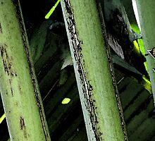 Stalks High Contrast by noriesworld